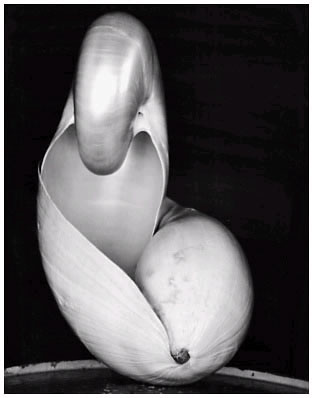 Edward Weston Images - shell