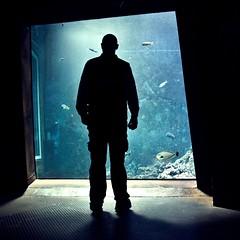 groer typ kleine fische (bleibt fr dich) Tags: blue silhouette blauw blau vissen bremerhaven fische klimahaus erisveelteontdekken