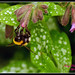 Bumble Bee4