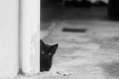 Blackie (SuhaimiSalleh) Tags: film analog nikonfm nikkormicro105mmf28