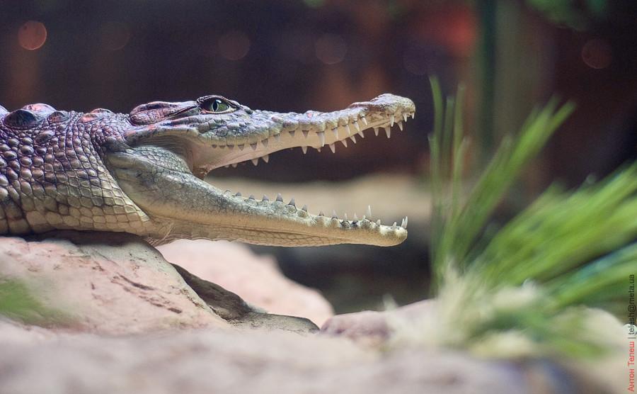 фотограф Антон Телеш Донецк дельфинарий океанариум крокодил