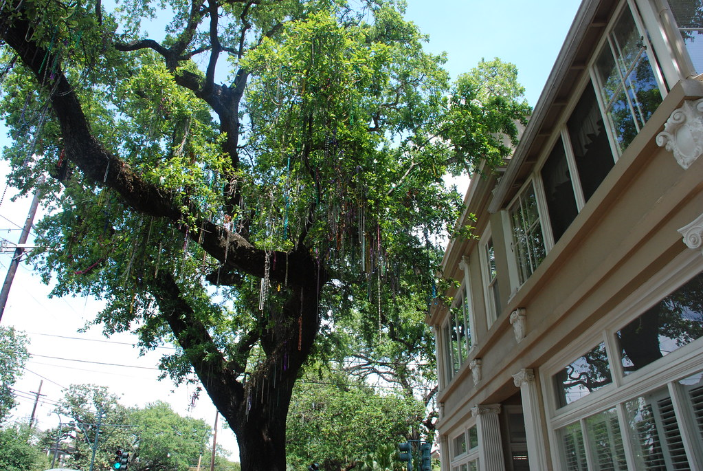 the trees grow beads in the Garden District