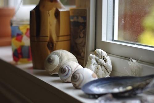 Lucy Island Shells