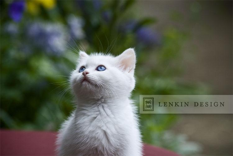 Lenkin-04.18.11-214