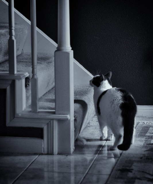 120/365: The Cat's Stairs