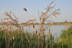 Zona umida (gpa59) Tags: oasi larizza