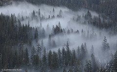 Fog and Trees, Yosemite National Park, CA (Sudheendra Kadri) Tags: trees winter mist snow ice nature fog yosemitenationalpark sudhi tunnelview landscapephotography canon70200mm canon5dmarkii sudheendrakadri intimatescene