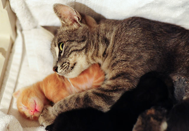 cute rescue cat mama cuddle her baby kitten