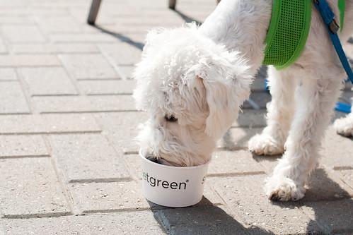 Dogs like Yogurt too?