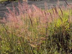 caminho (aqui-) Tags: flower camino path flor livro literatura caminho bh markuszusak aqui ameninaqueroubavalivros cemitriodapaz