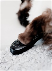 110528 Day184/365 BRUS (Peter Hillhagen) Tags: cat ragdoll brus funnyanimal fotosondag fs110529