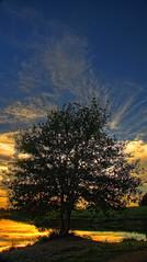 Remember [CPL HDR] (Shoyun) Tags: blue sunset orange lake tree nature water field canon eau lac bleu polarizer reflexion arbre hdr coucherdesoleil cpl polarisant polarizerfilter filtrepolarisant shoyun canonpowershotsx1is