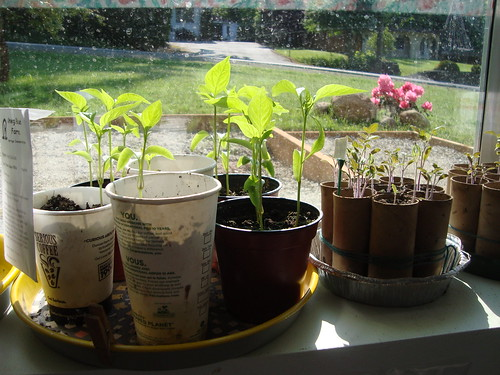 tomato and pepper plants!