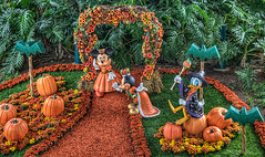 The Harvest Court (Tours Departing Daily) Tags: california disneyland fineart disney southerncalifornia anaheim walt hdr toursdepartingdaily disneylandhdr
