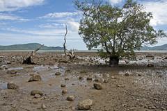 Mangrove overlooking Chalong Bay, Phuket (HellonEarth2006) Tags: sea thailand mangrove phuket tidal chalongbay