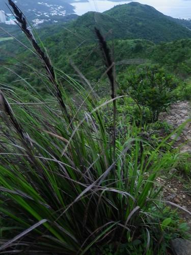 20110621 Longish Post-work Sunset Trail Run