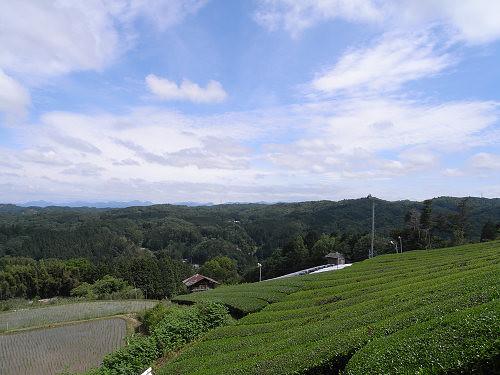 茶畑@山添村-04