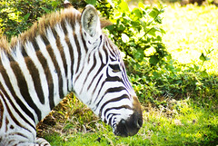 "PhotoFly Travel Club Kenya Safari 2011! • <a style=""font-size:0.8em;"" href=""https://www.flickr.com/photos/56154910@N05/5892431821/"" target=""_blank"">View on Flickr</a>"