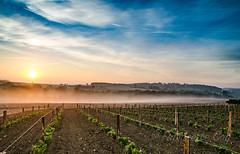 Les secrets du sol (Fabrice Le Coq) Tags: ciel nuages bleu campag ne champs vigne vin vert soleil brume matin soir extérieur paysage nuage champ culture fabricelecoq