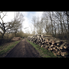 Log Lined (Dkillock) Tags: wood david forest 35mm canon woodland ed eos woods dof bokeh mark wide logs wideangle full ii frame if 5d nik fullframe ultrawide f28 hertfordshire bower bridleway mkii deforestation umc ultrawideangle hertfordheath 14mm samyang as killock 5dmarkii 5d2 5dmkii dkillock ballswoods samyang14mmf28edasifumc davidkillockphotography colourefex30