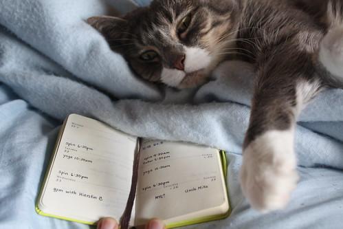 Scheduling Cat