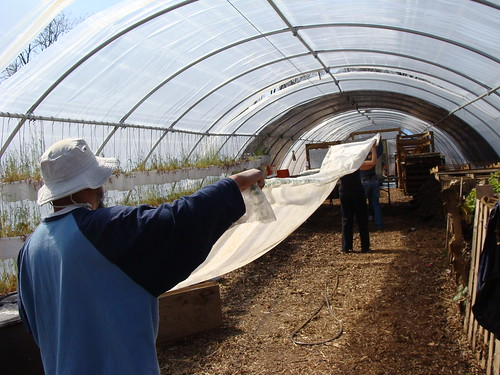 White Sails in Hoop House #4