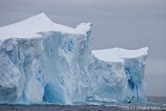 ANTARCTICA OPERATION NO COMPROMISE (David Gorn) Tags: antarctica steveirwin seashepherd photographerbarbaraveigamailbarbaravitoriagmailcom operationnocompromise