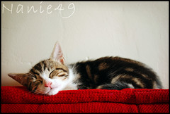Zan, enfin tranquille. (nanie49) Tags: france cat nikon kitten chat gato katze gatto kot gatito ktzchen chaton d80 colorphotoaward flickraward