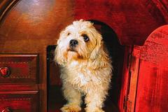 Dog Portrait (jta1950) Tags: portrait dog pet pets cute dogs animal painting adorable canine panasonic lx5 dmclx5