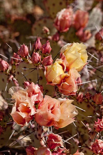 Riot of Cactus Color