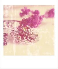 Something old (Aikaterini Koutsi Marouda aka kotsifi) Tags: old stilllife flower macro texture nature silver polaroid pin bokeh brooch 100mm fade jewelery gem canoneos40d kotsifi aikaterinikoutsimarouda