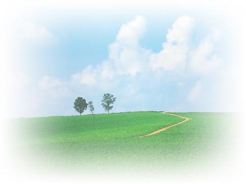 入道雲と親子の木へと続く道(1024x768)