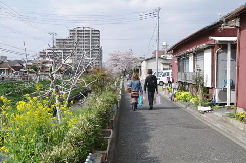 流山電鉄・新坂川沿いの桜