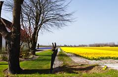 Bulb field near my home (j_wijnands) Tags: nikon d300 1855mmf3556gvr