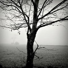 Disappearing into the fog... #3 13090007 (filipe franco) Tags: tree fog analog landscape analgica nebel paisagem kodakbw400cn nebbia fotoblog rvore niebla dimma nevoeiro canoneos300  kubrickslook