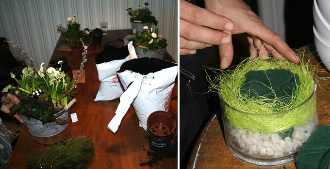 gröna växter 4