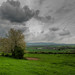 Robinswood Tree