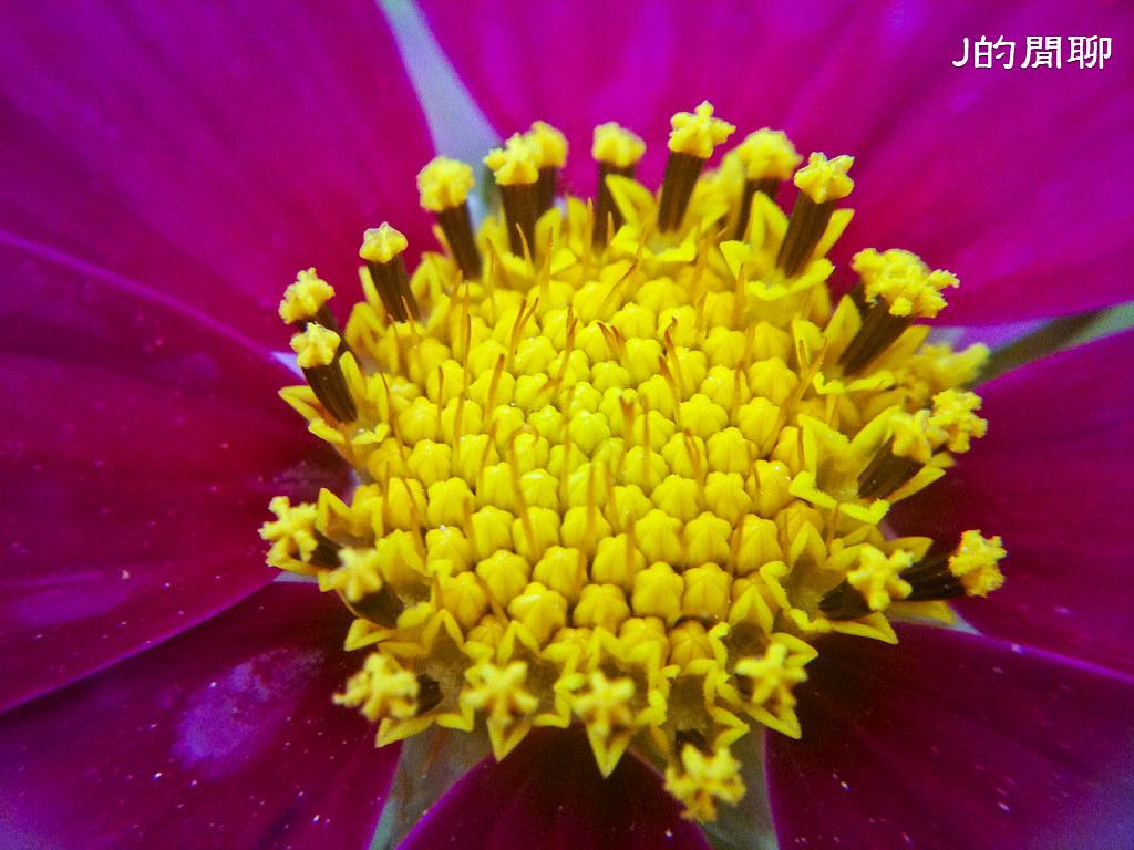 台大花海 黑冠麻鷺 20110416-080-J的閒聊