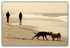 Sniffing....... ;-) (ByJeroen) Tags: sea summer dog sun beach dogs water monochrome sepia walking moving spring sand surf waves walk wave sunny hike northsea sniffing noordwijk dayatthebeach noordwijkaanzee byjeroen doublyniceshot tripleniceshot mygearandme mygearandmepremium mygearandmebronze mygearandmesilver mygearandmegold mygearandmeplatinum mygearandmediamond artistoftheyearlevel4 aboveandbeyondlevel1 aboveandbeyondlevel2