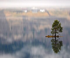 Beautiful little island with a lonely tree and a magic reflection (Martin Ystenes - hei.cc) Tags: lake beautiful norway fog pinetree pine reflections landscape island norge magic norwegian 1001nights furu singletree holme innsjø magiccity øy nordfjord smallisland hornindal norwegianisland norwegianlandscape singeltree ystenes microisland bestcapturesaoi hornindalsvatnet elitegalleryaoi mygearandme mygearandmepremium mygearandmebronze mygearandmesilver mygearandmegold mygearandmeplatinum mygearandmediamond martinystenes artistoftheyearlevel3 artistoftheyearlevel4 aboveandbeyondlevel4 singletre aboveandbeyondlevel1 flickrstruereflection1 flickrstruereflection2 flickrstruereflection3 flickrstruereflection4 flickrstruereflection5 flickrstruereflection6 flickrstruereflection7 artistoftheyearlevel5 flickrstruereflectionexcellence artistoftheyearlevel7 artistoftheyearlevel6 aboveandbeyondlevel2 aboveandbeyondlevel3 rememberthatmomentlevel4 rememberthatmomentlevel1 rememberthatmomentlevel2 rememberthatmomentlevel3 rememberthatmomentlevel9 rememberthatmomentlevel5 rememberthatmomentlevel6 rememberthatmomentlevel10 infinitexposure