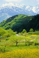 [フリー画像] 自然・風景, 山, 飛騨山脈・北アルプス, 日本, 201104231900
