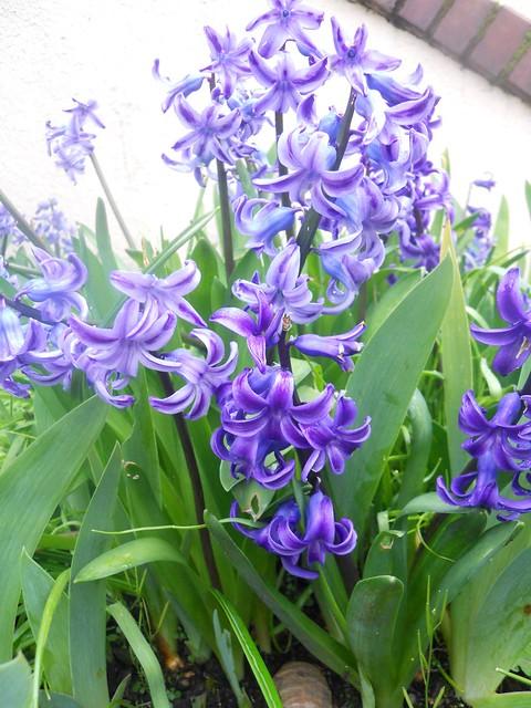 spring2011 203