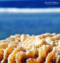 Sea Corals (Kamal N. Badawy) Tags: sea beach coral nikon coolpix p100     rabegh