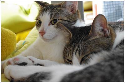 今日の猫(2011-04-29)