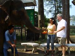 Feeding_Elephant05 (ellishackler) Tags: max ray ellis mark jim lori nancy maxwell hack deanna dee keerti hackler ellishackler