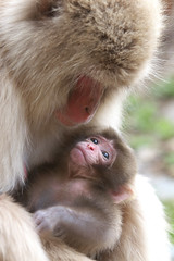 Mother and Baby (Masashi Mochida) Tags: baby snow japan monkey mother nagano jigokudani coth supershot natureselegantshots