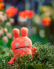 my beloved monster and me (pixelmama) Tags: garden bokeh uglydoll eels the happybirthdaysarah thissongrocks plunko shreksoundtrack mybelovedmonster toyintheframethursday htitft forsarahp especiallythatfunsceneinshrek