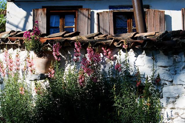 sirince - flowers