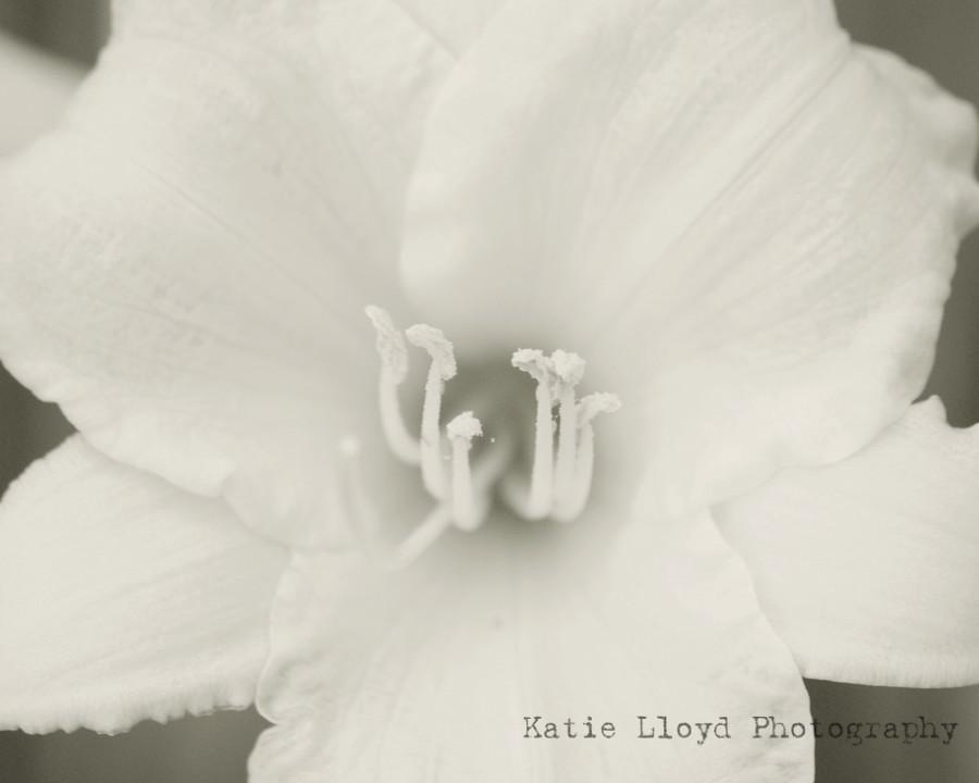 B&W-Daylily-4---8x10