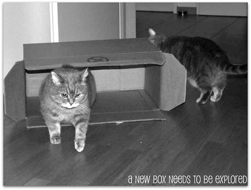 Kashim, Othello and the new box